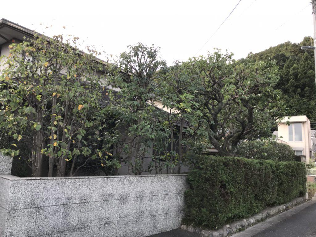 樹によって違う剪定方法