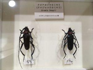 黒くてテカテカしている虫と言えば・・・